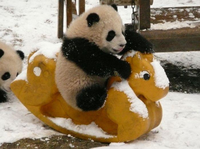 """Existe una """"guardería"""" para pandas y es un lugar muy tierno"""