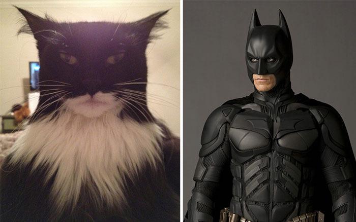 21 gatos con asombroso parecido a famosos