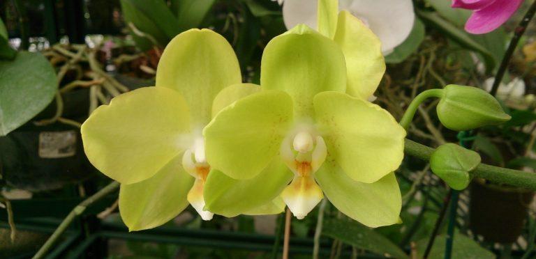 El CCBOD se convierte de nuevo en un jardín de orquídeas